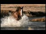 Клейдсайдельские лошади в рекламе пива Бадвайсер. Любовь это...